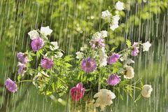 Summer rain and flowers Royalty Free Stock Images