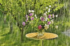 Summer rain and flowers Royalty Free Stock Photography