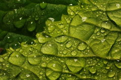 After a summer rain. macro photo of water drops ( dew ) on the stems and leaves of green plants. Stock Images