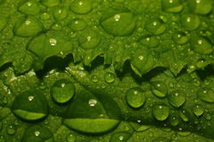 After a summer rain. macro photo of water drops ( dew ) on the stems and leaves of green plants. Royalty Free Stock Photos