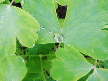 After a summer rain. macro photo of water drops  dew  on the stems and leaves of green plants. Stock Photo