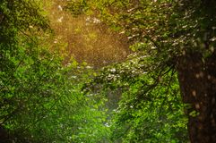 Summer rain. In the park Stock Photography