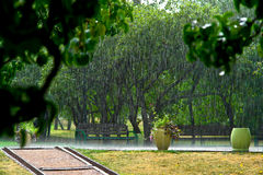 Summer rain in the park. Royalty Free Stock Images