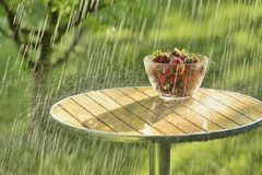 Summer rain and strawberries Stock Photos