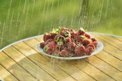 Summer rain and strawberries Stock Photo