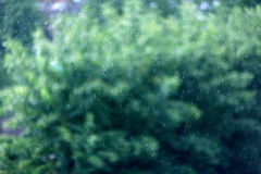 Summer rain texture leaves green Royalty Free Stock Images