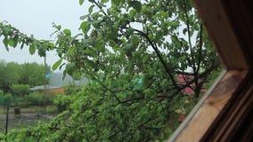 Summer rain stock video