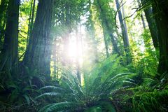 Summer in Rainforest. Olympic National Park, Washington U.S.A. Olympic Mountains Stock Image