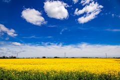 Summer rapeseed field Kent Southern England UK Royalty Free Stock Photo