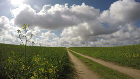 Summer rapeseed field road and clouds. timelapse 4K stock video