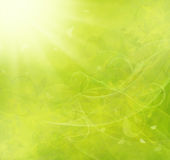 Summer raster background Royalty Free Stock Images