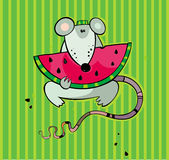 Summer rat with watermelon Stock Photos