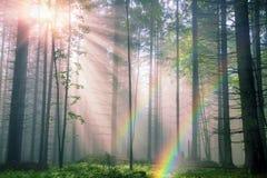 Summer rays Stock Photo