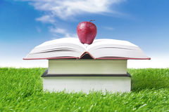 Summer reading concept royalty free stock images