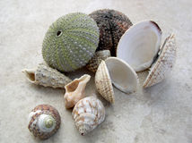 Summer recollection. Sea shells from holidays in Croatia Stock Photo