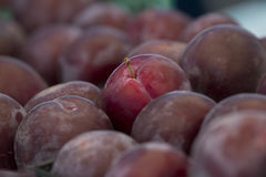 Summer Red Plums Stock Image