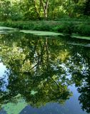 Summer Reflection Royalty Free Stock Images