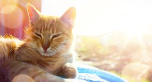 Summer relax;  happy cat gets pleasure basking in the summer sun royalty free stock images