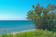 Summer resort of Halkidiki peninsula, Greece Royalty Free Stock Image