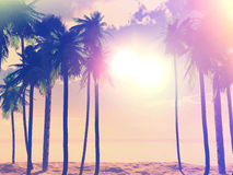 Summer retro palm trees Stock Images