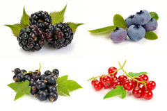 Summer ripe berries with leaves Royalty Free Stock Photo