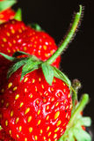Summer ripe juicy red strawberry close-up Stock Images