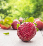Summer ripe strawberry Royalty Free Stock Photo