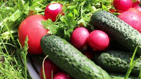 Summer ripe vegetables. Cucumbers, tomatoes, radishes and herbs laid out on a plate