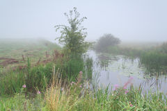 Summer river in foggy morning Stock Image
