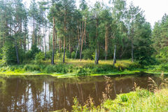 Summer river and forest Russian. Nerskaya River 13 06 16 royalty free stock images