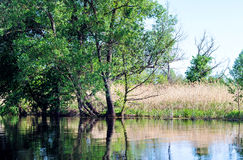 Summer river landscape. Stock Photography