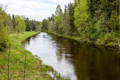 Summer river with reflections. In Gauja National Park in Latvia Royalty Free Stock Photo