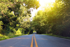 Summer road. Through the forest Stock Photography