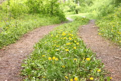 Summer road in forest with green grass and yellow flowers. Beautiful landscape stock photography