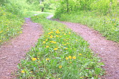 Summer road in forest with green grass and yellow flowers. Beautiful landscape royalty free stock photos