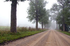 Summer road with mist and tree Royalty Free Stock Image