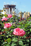 Summer roses at VDNKH park in Moscow. Royalty Free Stock Photography