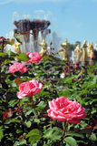 Summer roses at VDNKH park in Moscow. Stock Photo