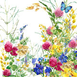 Summer rural field Herb flowers and butterfly background. watercolor illustration. Field Herb flowers and butterfly watercolor background Royalty Free Stock Photography