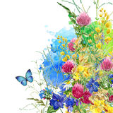 Summer rural field Herb flowers and butterfly background. watercolor illustration Royalty Free Stock Photo