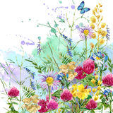 Summer rural field Herb flowers and butterfly background. watercolor illustration. Field Herb flowers and butterfly watercolor background Stock Photography