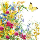 Summer rural field Herb flowers and butterfly background. watercolor illustration. Field Herb flowers and butterfly watercolor background Royalty Free Stock Image