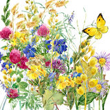 Summer rural field Herb flowers and butterfly background. watercolor illustration. Field Herb flowers and butterfly watercolor background Stock Photo