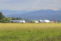Summer Rural Field and Mountains Royalty Free Stock Image