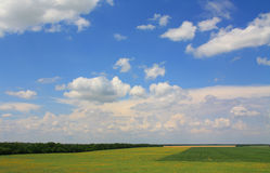 Summer rural landscape Stock Image