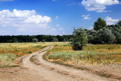 Summer rural landscape. Royalty Free Stock Images