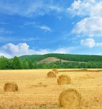 Summer rural landscape Royalty Free Stock Photography