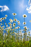 Summer rural landscape with a blossoming meadow and the blue sky Stock Photo