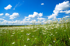 Summer rural landscape with a blossoming meadow and the blue sky Royalty Free Stock Photography