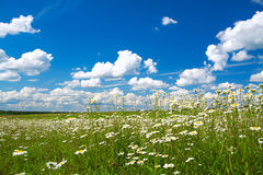 Summer rural landscape with the blue sky Stock Images